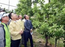 [문경]김현수 농림축산식품부 차관 이상저온 피해 농가 방문