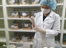 [문경]오미자추출물로 당뇨치료 전임상시험에서 상당한 효과 나타나
